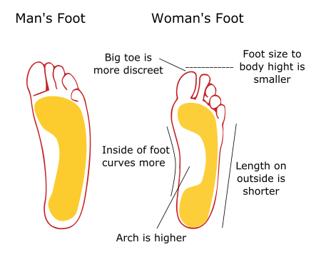 mans foot vs womans foot